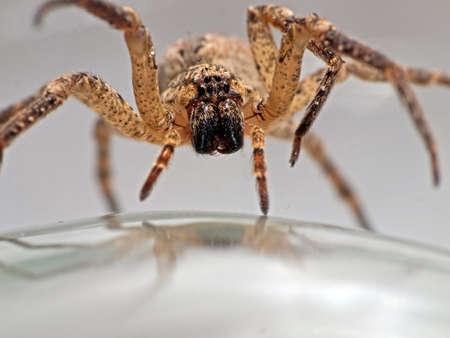 frightening: Arachnophobia - spider advancing