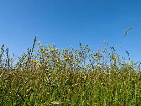 breezy: Spring flowers and sky - breezy background