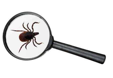 Cat   dog   deer tick insect under magnifying glass, isolated