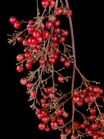 unidentified: Unidentified red berries nature background Stock Photo