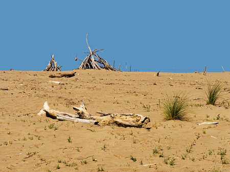 desertification: Deserted sandy beach getaway with driftwood