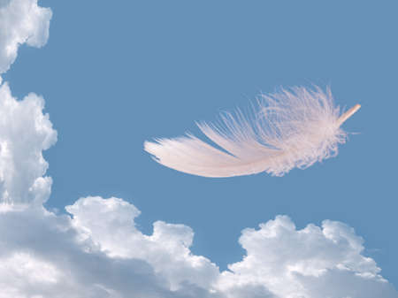 Floating feather over wky - free, freedom concept