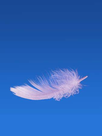 piuma bianca: Galleggianti piuma