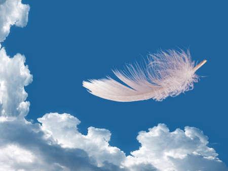 feather white: Galleggianti piuma
