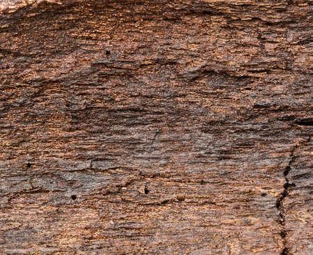 soggy: Soggy bark, wet wood  Stock Photo