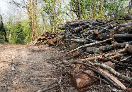 forest management: Woodland managemant, land clearance Europe  Countryside landscape