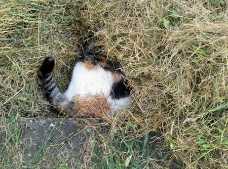 imminent: Veterinary visit imminent - cat hiding in grass to svoi appointment