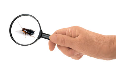 Environmental health risk  Cockroach under magnifying glass  photo