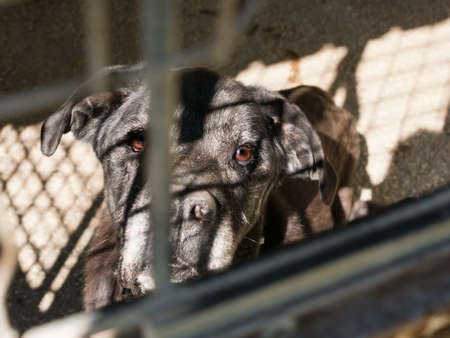 Really cute sad old dog in cage photo