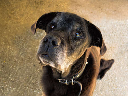 Sad old dog with appealing eyes needs a new home. photo