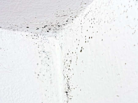 Indoor mould, mold. Common in many old houses. photo