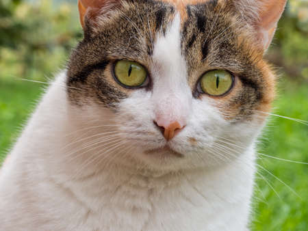aggressively: Curious cat faces camera Stock Photo