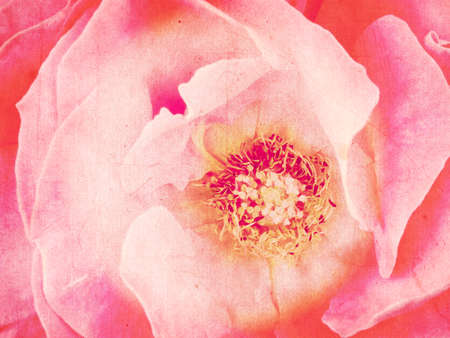 faded: Grunge textured rose. Faded