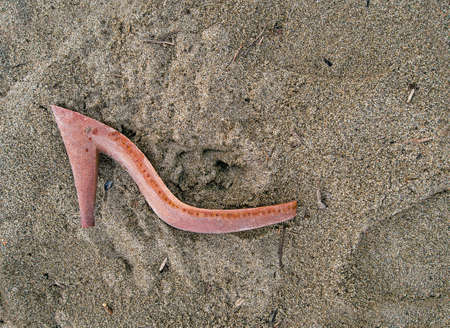 Washed up old shoe. Pollution or missing person, crime, mystery. photo