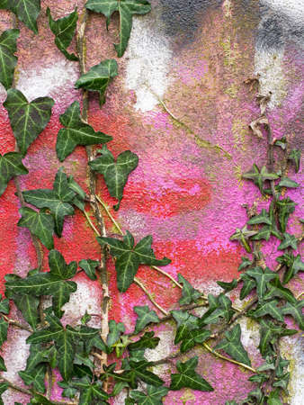 reclamation: Beautiful contrast - natural ivy and colourful graffiti detail
