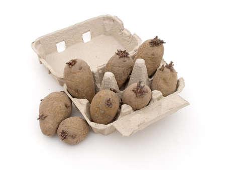 egg box: Seed potatoes chitting in egg box. Spring gardening. On white.