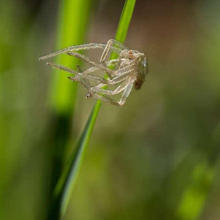 exoskeleton: Nature. Spider exoskeleton abandoned on blade of grass. Stock Photo