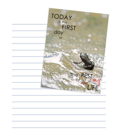 adulthood: Really tiny baby toad just discovering dry land. The future awaits.