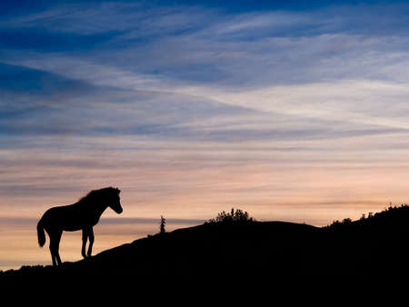 exmoor: Exmoor pony at dusk, Devon, UK Stock Photo