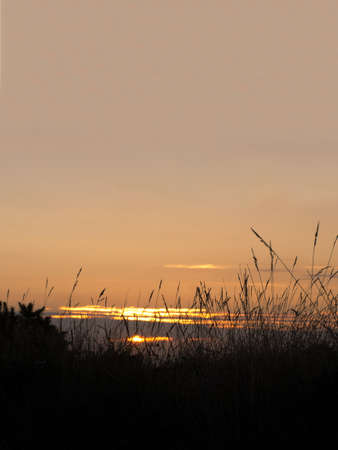 in loving memory: Grasses silhouetted agaist last rays of the sun.