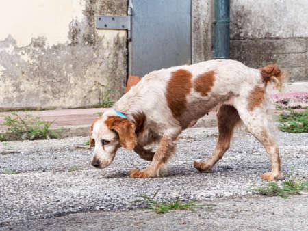 bitch: Sad dog in urban setting. Well - bitch. Stock Photo
