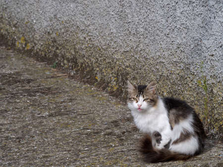 calico: Calico cat in street. Stray.