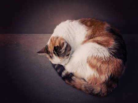 filtered: Sleeping cat filtered image Stock Photo