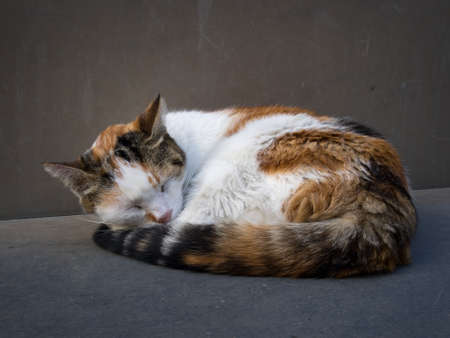 contentedness: Cat curled up and sleeping outdoors Stock Photo