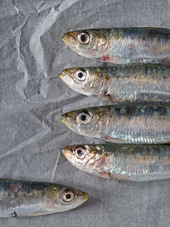 sardines: Healthy option. Sardines on kitchen paper. Stock Photo