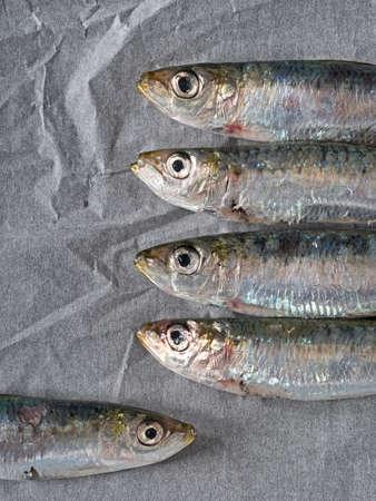 sardinas: opción saludable. Sardinas en papel de cocina. Foto de archivo