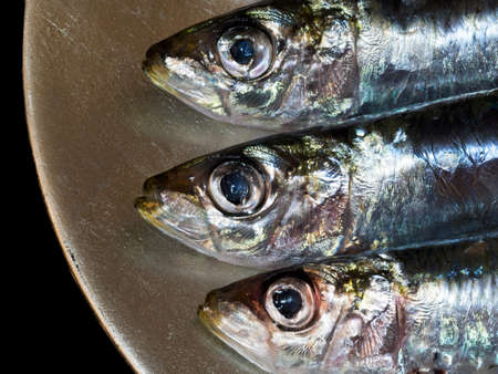 sardinas: Comida sana. Las sardinas se cierran para arriba Foto de archivo