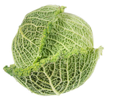 jaunty: Savoy type cabbage. Home grown. Isolated.