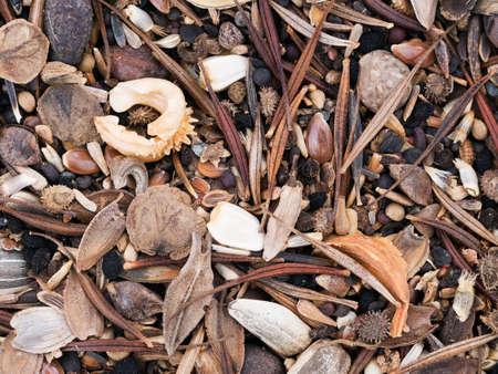 siembra: Surtido de semillas de flores para la siembra. Foto de archivo