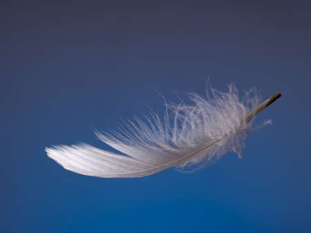 floats: Soft fluffy feather floats