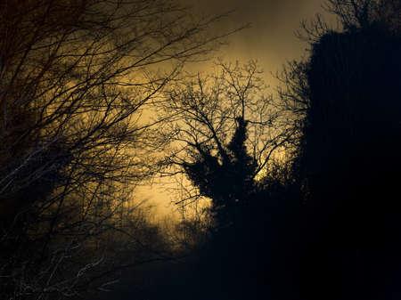 dark woods: Wild woods. Stock Photo