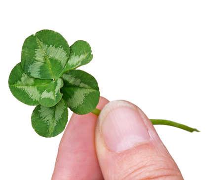 lucky clover: Genuine six leaf clover. Lucky