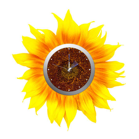 Sunflower clock. Summer time starts, isolated on white.