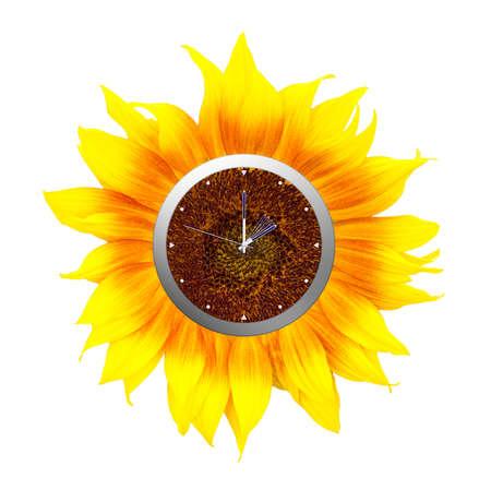 daylight: Sunflower clock. Summer time starts, isolated on white.