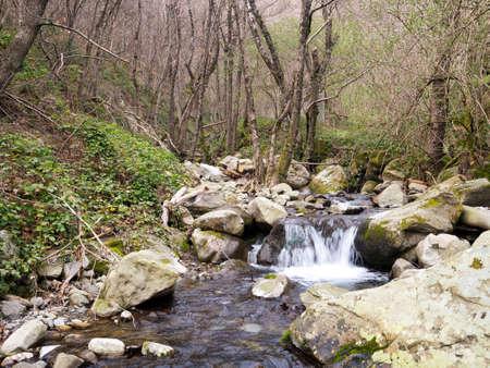 springwater: Beautiful nature. No sign of people, rubbish etc. Pristine. Stock Photo