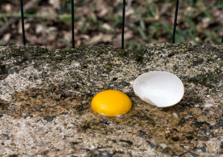 thieving: Hens egg fallen on wall, outside. Magpie problem. Stock Photo