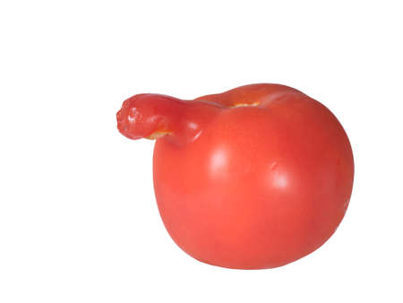 Odd vegetable. Phallic tomato. Isolated on white.