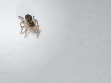 salticidae: Really cute jumping spider on wall.