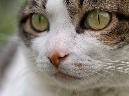 moggy: Closeup cats eye - veterinary etc.