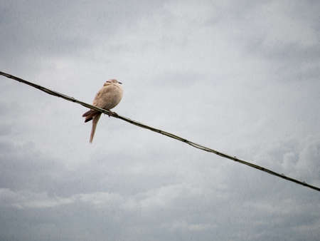 soggy: One soggy bird on the telephone wire. Rainy day, bad weather background.