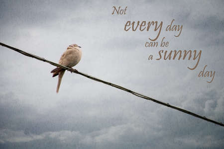 soggy: Truism. Soggy bird on wire in rain. Not every day can be a sunny day.