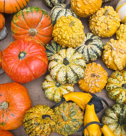 cucurbitaceae: Assorted decorative gourds, Cucurbitaceae. Yellow, orange.