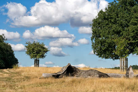 Beautiful open landscape with great clouds, log in foreground.