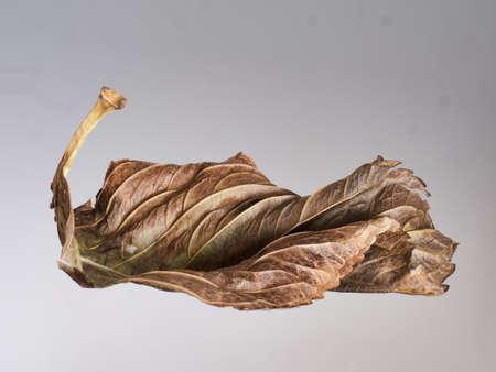 Simple natural curves. Autumn leaf.