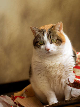 my cat last christmas in the gift wrap focus on cat paper unidentifiable stock photo picture and royalty free image image 85655750 - How To Wrap A Cat For Christmas