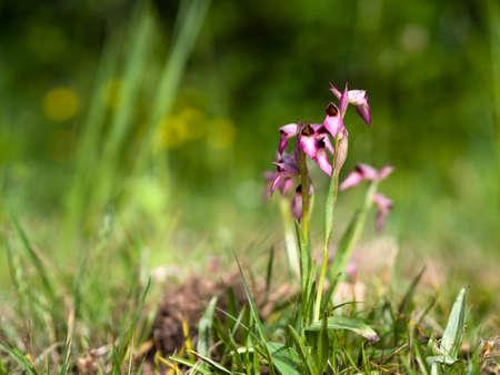 Wild orchids in meadow. NB narrow depth of field.